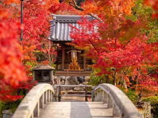 """Herbstzeit: Die Japaner sehen rot und feiern """"Momijigari"""""""