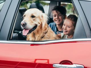 Die besten Tipps gegen Hitze im Auto