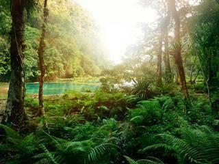 Von wegen grüne Hölle: Zehn Dschungelziele für einen tollen Trip