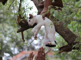 Rettung aus den Baumkronen: Tom & Shaun helfen kleinen Kätzchen