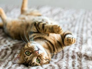 Warum Sie mit Katzenbissen immer zum Arzt gehen sollten
