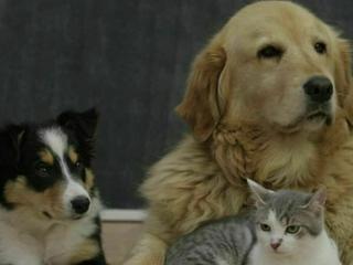 So nennen die Deutschen ihre Katzen und Hunde