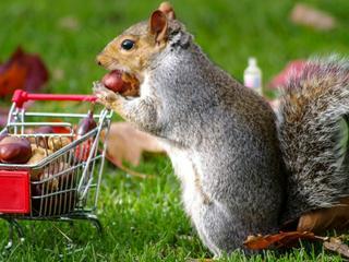 Verrückt: Tier lagert über 100 kg Nüsse in einer Antenne